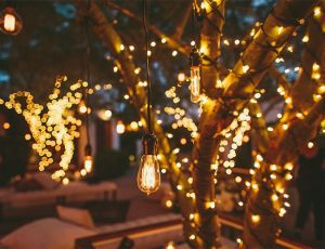 fairylightstrees